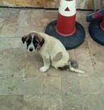 SOKAK KÖPEĞİ - Yaralı Yavru Köpeğin Durumu Vatandaşları İsyan Ettirdi