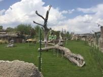 ELEKTRİK AKIMI - Eskişehir Hayvanat Bahçesi'nde Skandal Görüntü