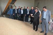 MEHMET ŞAHIN - Gaziantepli Hububatçılardan Güneydoğu Çıkarması