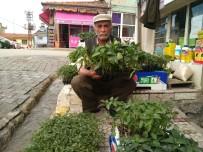 ABDULLAH YıLMAZ - Hisarcık'ta Sebze Fidesi Satışları Arttı