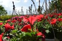 İŞKUR - Kırıkkale Çiçek Bahçesi Haline Geliyor