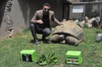 HAYVANLAR ALEMİ - 97 Yaşındaki Kaplumbağa Tuki'den Derbi Tahmini