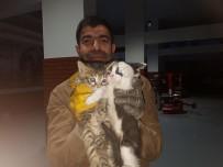 Kediler Ölmesin Diye Aracının Kaportasını Kırdırdı