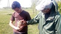 MILLI PARKLAR GENEL MÜDÜRLÜĞÜ - Tedavisi Biten Kuşlar Özgürlüğüne Kavuştu