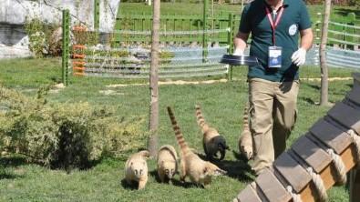 Rakun Hayvanat Bahçesinde Elektrik Akımına Kapıldı
