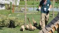 HAYVANAT BAHÇESİ - Rakun Hayvanat Bahçesinde Elektrik Akımına Kapıldı