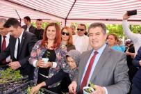 PAZARCI - Başkan Çerçioğlu Buharkent'te Yerli Fide Dağıttı