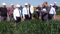 ZEKERIYA SARıKOCA - Türkiye Yüzde 100 Yerli Tohum Üretiyor