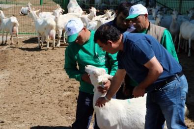 4 bin lira maaşla çoban yetiştiriyorlar!