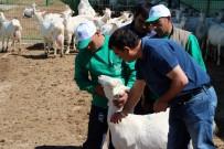 SÜRÜ YÖNETİMİ - 4 bin lira maaşla çoban yetiştiriyorlar!