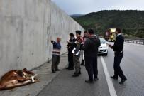 Kastamonu'da D-100 Karayoluna İnek Düştü