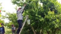 KAYMAKÇı - Kilosu 400 TL'den 7 TL'ye Düştü