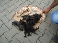 İSLAMKÖY - Kulp'ta Bulunan Yavru Kurtlar Koruma Altına Alındı
