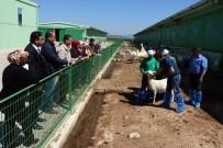 SÜRÜ YÖNETİMİ - 4 Bin Lira Maaşla Çoban Yetiştiriyorlar