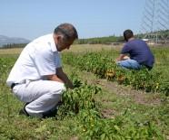 ORGANIK TARıM - Ziraat Fakültesi'nden Meraklısına Organik Tarım Eğitimi