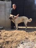 Burhaniye'de Çalınan Köpek Jandarmayı Alarma Geçirdi