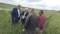 RÜŞTÜ ZORLU - Çiftçilerin Beyaz Başak Endişesi