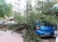 LODOS - Kiraladıkları Aracın Üzerine Çam Ağacı Devrildi