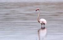 Akkaya Barajı Flamingoları Ağırlıyor