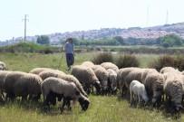 EV HANIMLIĞI - Sertifikalı Modern Kadın Çoban