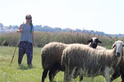 Sertifikalı modern kadın çoban!