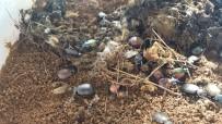 ÇAM KESE - Terminatör Böcekler Ormana Salındı