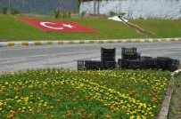 KAMIL CEYLAN - Köyceğiz'de Mevsimlik Çiçek Dikimi