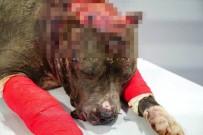ACıMASıZ - Hayvan Hakları İhlali Cezasız Kalmadı