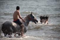 PAYAS - At Sırtında Deniz Keyfi