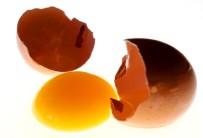 ARAŞTIRMACI - Her Gün Bir Yumurta Çocuk Gelişimine Katkı Sağlıyor