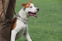 REINA - Köpekler Podyumda Boy Gösterdi