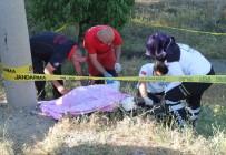 FıRAT ÜNIVERSITESI - Otomobil Yayaya Çarptı, Şarampole Uçtu Açıklaması 1 Ölü, 4 Yaralı