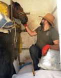 YARIŞ ATI - Yarış Atı Taşıyan Araçtan Uyuşturucu Çıktı