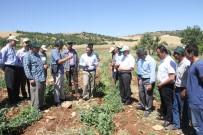 Diyarbakır'da Terör Bitti Tarım Canlandı