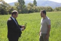 MURAT ŞAHIN - Erzincanlı Çiftçiler Yeni Yem Bitkilerinden Memnun