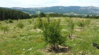 Kütahya'da 2 Bin Badem Fidanı Toprakla Buluştu