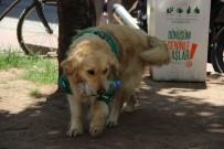 ÇEVRE TEMİZLİĞİ - Çöpçü Köpek Kadro Bekliyor
