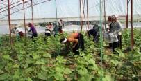 KADIN İŞÇİ - Kadın İşçilerin Ekmek Mücadelesi