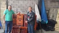 Şaphane'de Kiraz Satışları Başladı