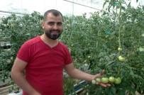 YÜZÜNCÜ YıL ÜNIVERSITESI - Vanlı Domates Üreticisi Eğitim Serası Kurdu