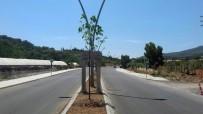 OSMAN GÜRÜN - Büyükşehir'den Datça Yollarına 9 Milyon TL'lik Yatırım