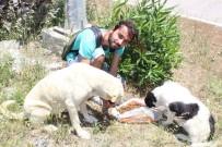 DAYAK - Köpek Besleyen Gençlere Saldırı Anı Kamerada