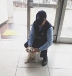 YAVRU KÖPEK - Yaralı Köpeğe Zabıta Sahip Çıktı