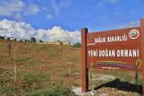 'Yeni Doğan Ormanı' Sinop'ta Filizlendi