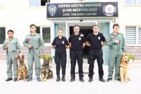 YAVRU KÖPEK - 3. Havalimanı İçin Hassas Burunlar Gölbaşı'nda Yetişiyor