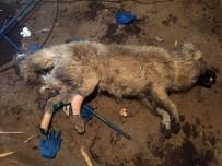 İSMAIL KAYA - Ayakları Kırılan Köpeğe Hayvanseverler Sahip Çıktı