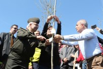 HASAN AKGÜN - Büyükçekmece'ye Bereket Ve Barışın Simgesi Zeytin Ağaçları Dikilecek