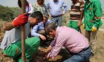 OKSIJEN - Çankaya'da 'Enerji Ormanı' İçin İlk Tohumlar Atıldı