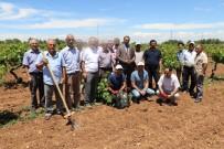 Elazığ'da Üzüm Yetiştiricilerine Kurs