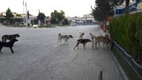 SOKAK KÖPEKLERİ - Köpeklerle Başa Çıkılamıyor
